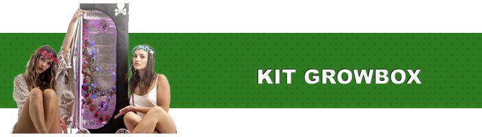 kit growbox